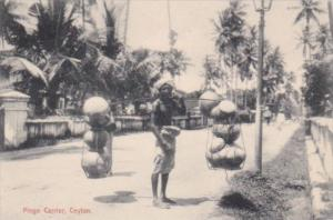 Sri Lanka Ceylon Native Pingo Carrier