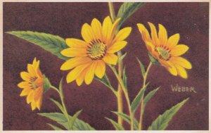 1900-1910's; Wild Sunflower, National Wildlife Federation