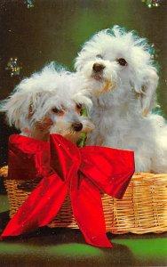 Poodles Dog Unused