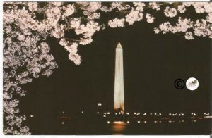 Vintage Postcard Night Scene of Washington Monument in Moonlight Framed by Pink
