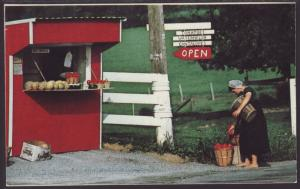 Amish Fruit and Vegetable Stand Postcard