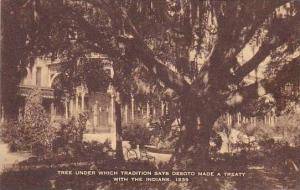 Tree Under Which Desoto Made A Treaty With The Indians 1539