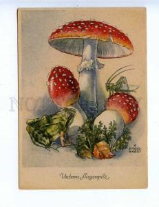 201818 MUSHROOM amanita grasshopper frog by ENGELHARDT vintage