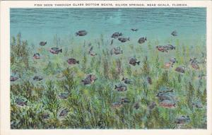 Fish Seen Through Glass Bottom Boats Silver Springs Florida