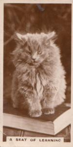 A Seat Of Learning Cat German Old RPC Cats Library Book Cigarette Card