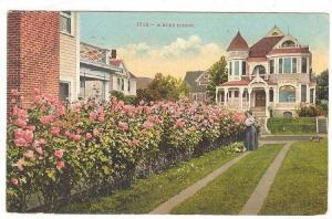 A Rose Hedge, Los Angeles, California,  PU-1909