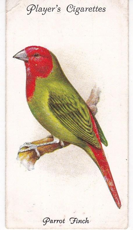 Cigarette Cards Players Aviary and Cage Birds No 50 Parrot Finch