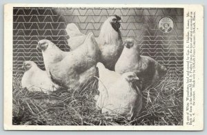 DeKalb IL Fence Co Advertising~Lamar MO~Hainline White Wyandotte Chickens~c1910