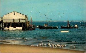 Massachusetts, Cape Cod - Gulls - Boats - Town Wharf - [MA-873]