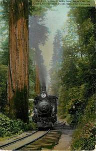 Big Tree Station, Southern Pacific, near Santa Cruz, CA,1909 Divided Back ,