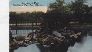 Wisconsin Milwaukee Sea Lions Play At Washington Park Zoo