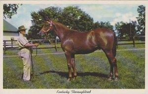 Kentucky Lexington Kentucky Throughbred