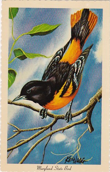 baltimore oriole maryland state bird hippostcard