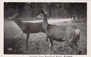 Wisconsin Greetings From Manitowish Waters Deer In The Northwoods Real Photo