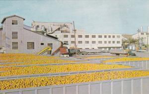 FLORIDA; Minute Maid Processing Plant, Oranges, 40-60s