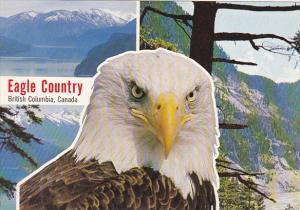 American Bald Eagle Eagle Country British Columbia Canada