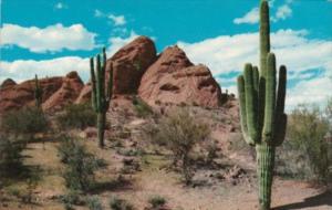 Cactus Giant Saguara Cactus