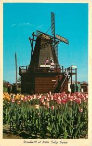 Holland Michigan~Nelis Nurseries~Tulip Farm~Windmill~1965 Postcard