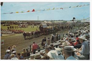Canada's only six oxen team leads off Saskatoon's Pion-Era parade, Saskatchew...