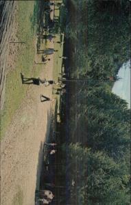 Waynesville NC Camp Hemlock For Boys Postcard