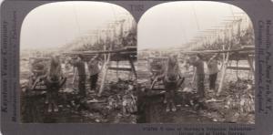 SV: 1910s ; Drying Cod , VARDO , Norway