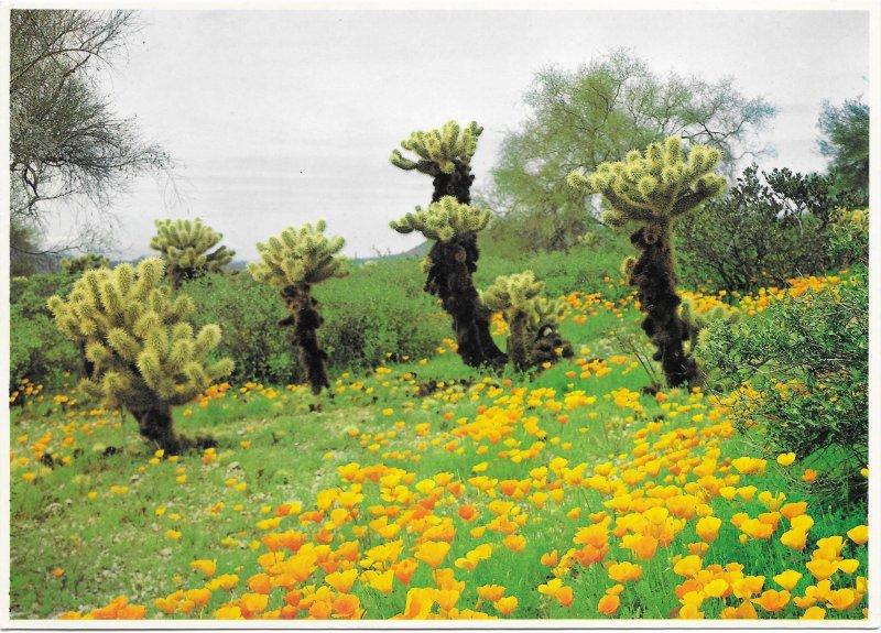 US Spring Poppies & Cholla. Card 5X7