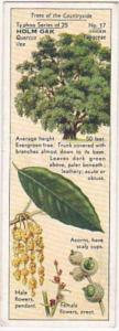 Typhoo Tea Vintage Trade Card Trees Of The Countryside 1936 No 17 Holm Oak
