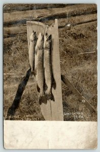 Sample From Gladstone MI~Speckled Trout I Caught~Fish Stringer Board~1912 RPPC