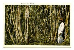 FL - Sugar Cane