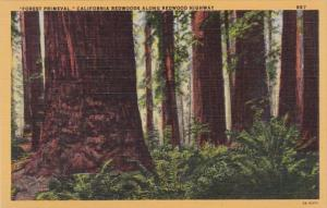 California Redwood Highway Forest Primeval California Redwood Trees