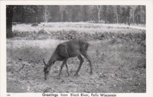 Wisconsin Greetings From Black River Falls With Deer Real Photo