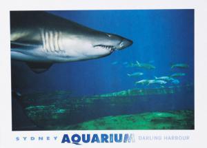 Great Nurse Shark Sydney Aquarium Darling Harbour Australia AU Postcard D31