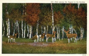Colorado Rockies, CO, Deer among the Aspens, Linen Vintage Postcard g9379