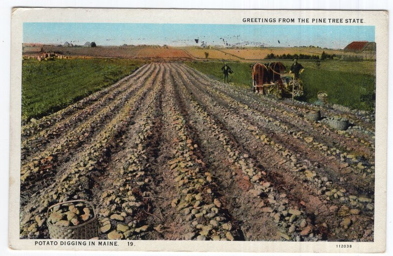 Greetings From The Pine Tree State, Potato Digging In Maine