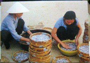 Vietnam Que Huong Fishery - unposted