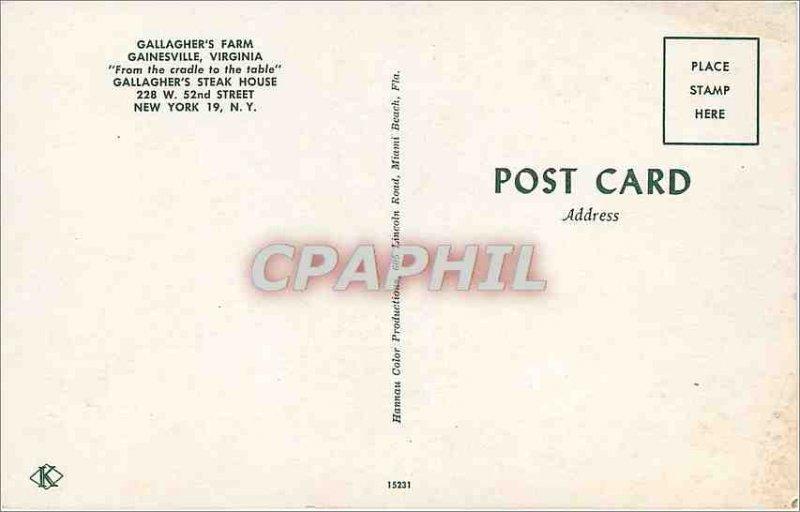 Postcard Modern Gainesville Virginia Gallagher's Farm