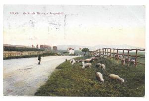 Italy Roma Via Appia Sheep Appian Way Aquaduct Vtg Postcard