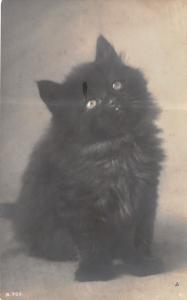 RPPC Togo the Little Black Kitten Wishes You a Happy Birthday~c1910 Postcard