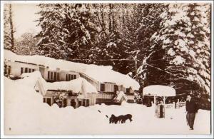 RPPC, Snow Scene, House and Dogs ?