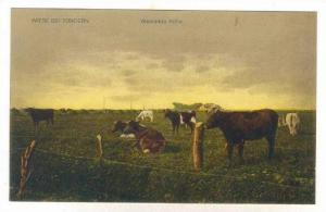 Wiese Bei Tondern, Widende Kuhe, Denmark, 1900-1910s
