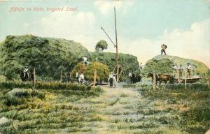 Alfalfa Agriculture Farming 1910 Idaho Irrigated Land postcard 2724
