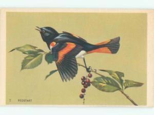 Pre-1980 REDSTART BIRD AC7103