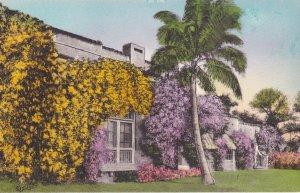Bignonia & Bougainvilleau in Bloom , Florida , 00-10s