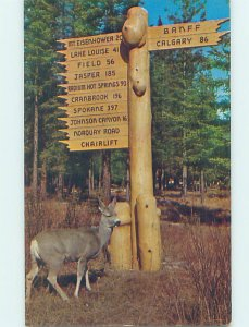 Pre-1980 VINTAGE SIGN ON POSTCARD Banff National Park Alberta AB AD3772
