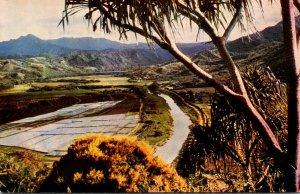 Hawaii Kauai View Of Hanalei Valley