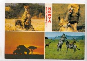 BEAUTIFUL KENYA, Lions, cheetah, rhino, zebras, used Postcard