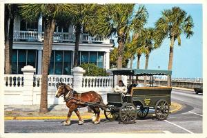 Charleston Street Scene Charleston SC Postcard Horse Drawn Carriage Company Co