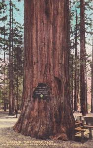 California Lane's Redwood Flat On Redwood Highway Handcolored Albertype