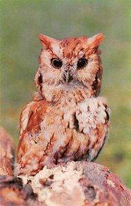 Spooky, Wise Owl Unused