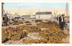 Key West Florida~New Sponge Catch For Sale~Businessmen on Dock~1920s PC